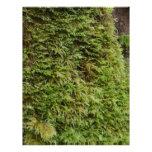 Green Moss Letterhead Template
