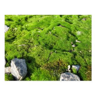 Green Moss Postcard