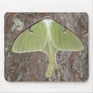 Green Moth Mouse Pad
