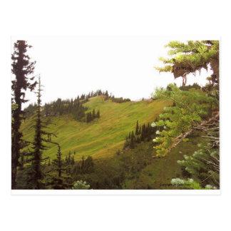 Green Mountain Meadow Mt Rainier National Park Postcards