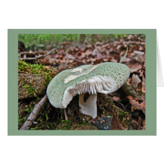Green Mushroom - Russula crusosa Greeting Cards