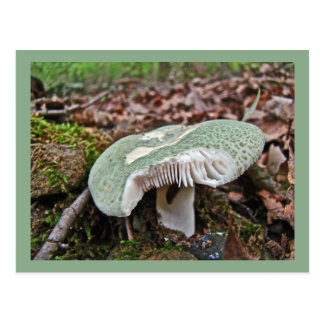 Green Mushroom - Russula crusosa Postcard