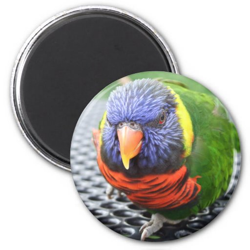 Green Naped Lory Magnet