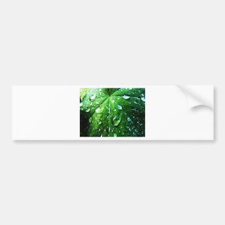 Green nature Leafs natural Water drop Clear Crysta Bumper Sticker