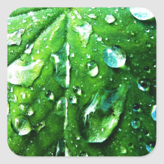 Green nature Leafs natural Water drop Clear Crysta Square Sticker