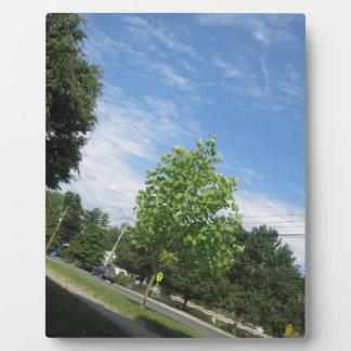 GREEN nature tree skyline NewJersey USA NVN675  GI Display Plaques