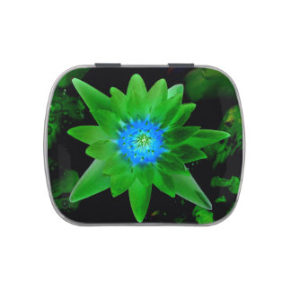 green neat water lily flower against green leaves candy tins