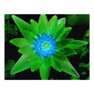 """green neat water lily flower against green leaves 8.5"""" x 11"""" flyer"""