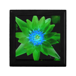green neat water lily flower against green leaves trinket boxes
