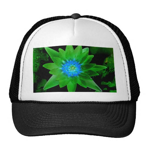 green neat water lily flower against green leaves hats