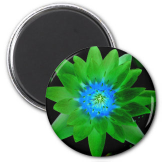 green neat water lily flower against green leaves magnet