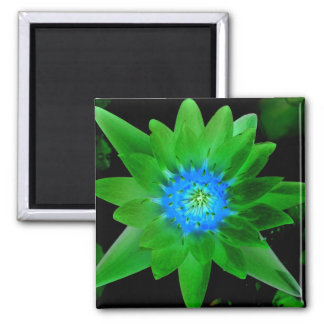green neat water lily flower against green leaves fridge magnets