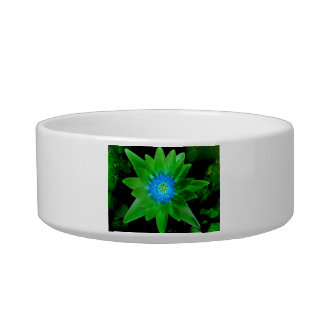green neat water lily flower against green leaves pet food bowl