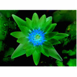 green neat water lily flower against green leaves photo cutout
