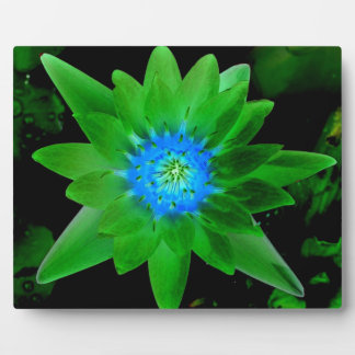 green neat water lily flower against green leaves photo plaque