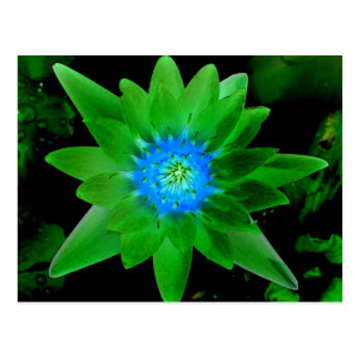 green neat water lily flower against green leaves postcard
