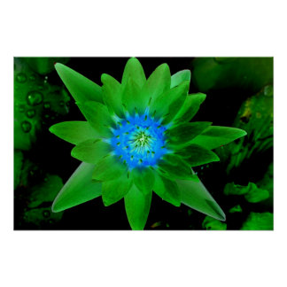 green neat water lily flower against green leaves poster
