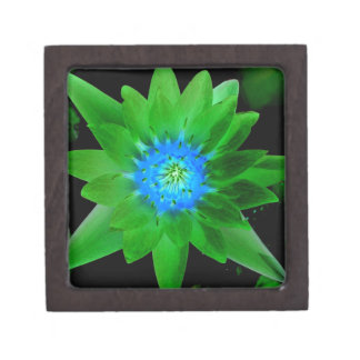 green neat water lily flower against green leaves premium jewelry box
