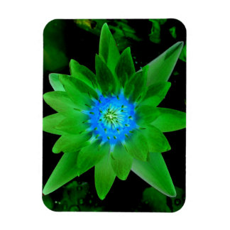 green neat water lily flower against green leaves rectangular magnet
