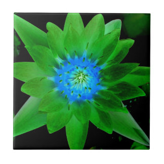green neat water lily flower against green leaves ceramic tile