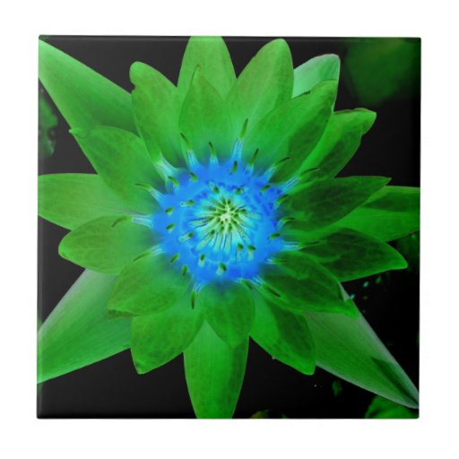 green neat water lily flower against green leaves small square tile