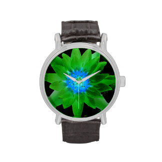 green neat water lily flower against green leaves watches