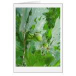 green oak acorn greeting cards