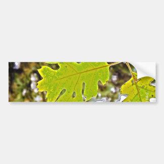 Green Oak Leaf HDR Bumper Sticker