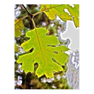 Green Oak Leaf HDR Postcard