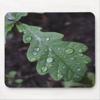 Green oak leaf in rain mouse pads