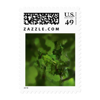 Green Oak Leaves. Gap in the branches. Stamps
