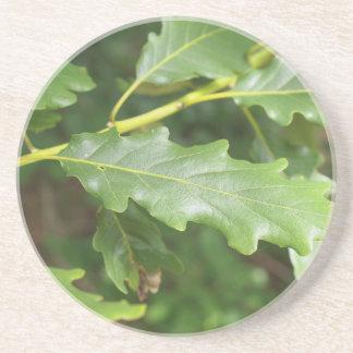 Green oak tree leaf beverage coaster