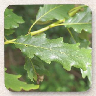 Green oak tree leaf coasters