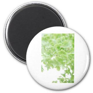 Green Oasis Magnet
