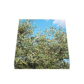 Green Olive tree Canvas Print