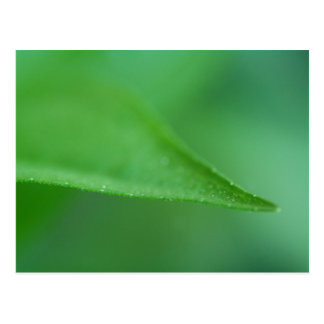 Green on Green Postcard