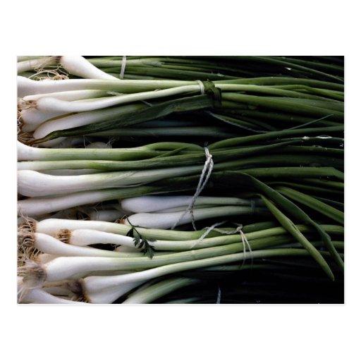 Green onions postcards