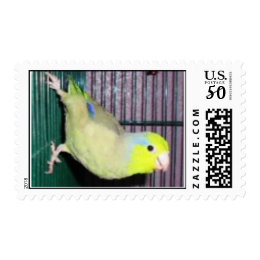 Green Pacific Parrotlet Postage