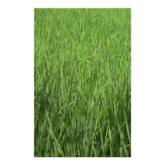 green padi's field stationery
