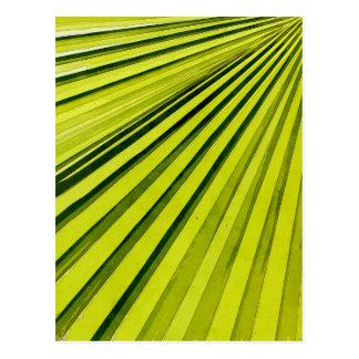 Green Palm Frond Postcard