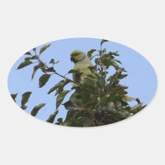 Green Parakeet Oval Sticker