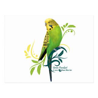 Green Parakeet Post Card