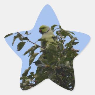 Green Parakeet Star Sticker