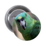 green parrot 2.jpg pins