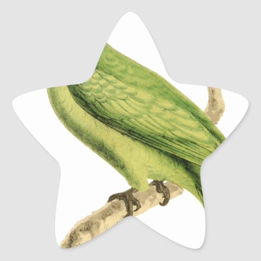 Green Parrot Bird Illustration by William Swainson Star Sticker