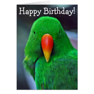 Green parrot birthday greeting card