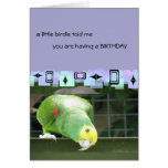 Green Parrot  Birthday Greetings Card