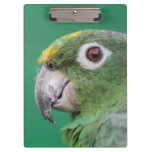 Green Parrot Clipboard
