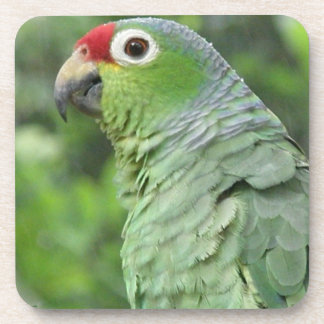 Green Parrot  Cork Coasters