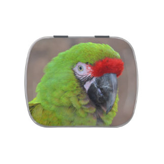 green parrot head view  bird jelly belly tins